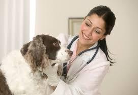 Сколько получают ветеринары в России