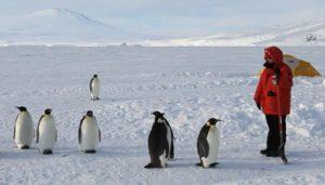 Какая зарплата у переворачивателя пингвинов